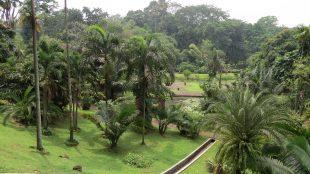 Lovely gardens at Kebun Raya