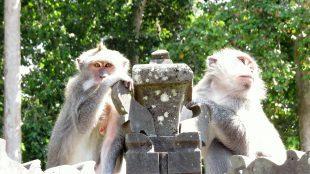 bali udud monkey forest