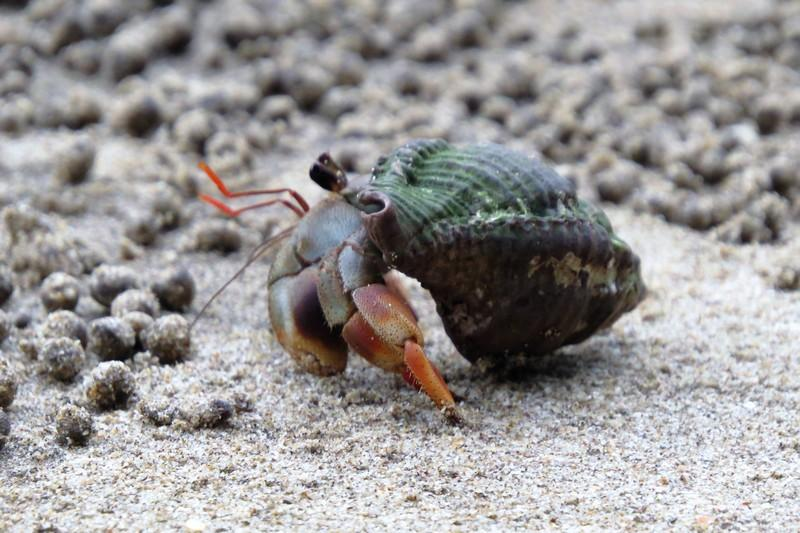 Hermit crabs scattered all over the beach