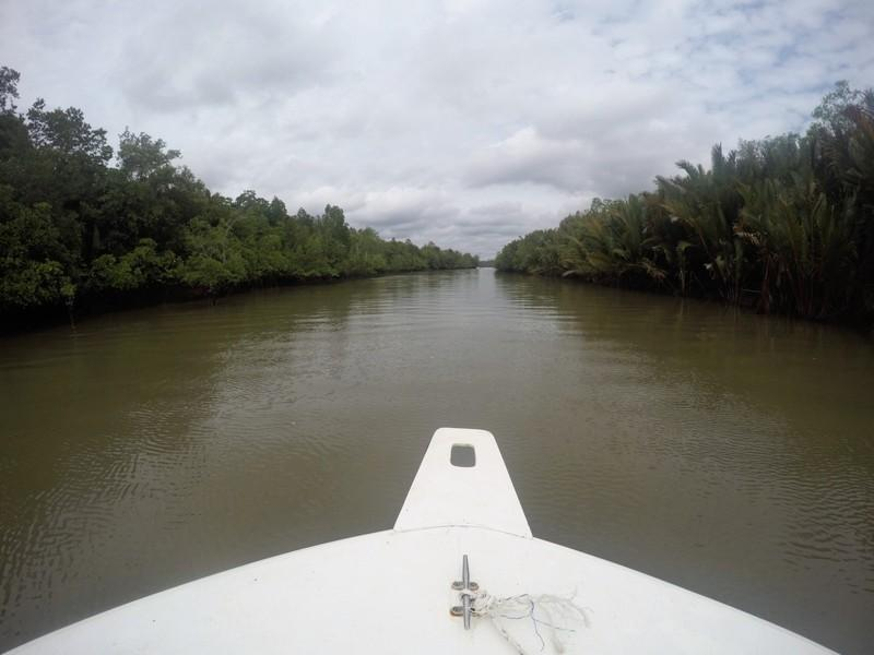 Mangrove swamp river cruise