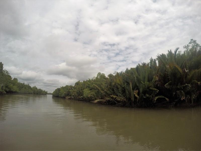 Mangroves of Sarawak