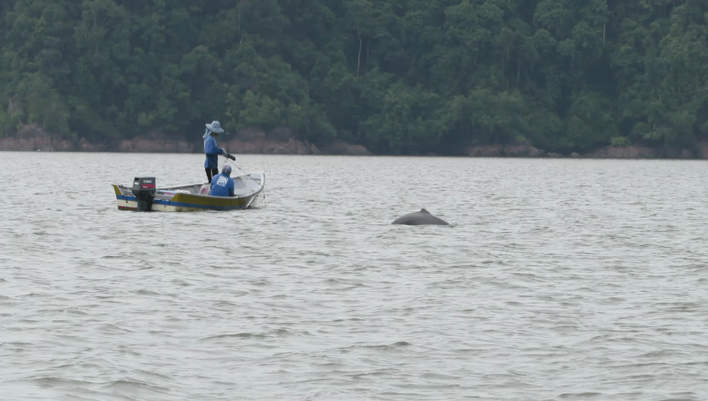 Irrawaddy dolphin watching cruise