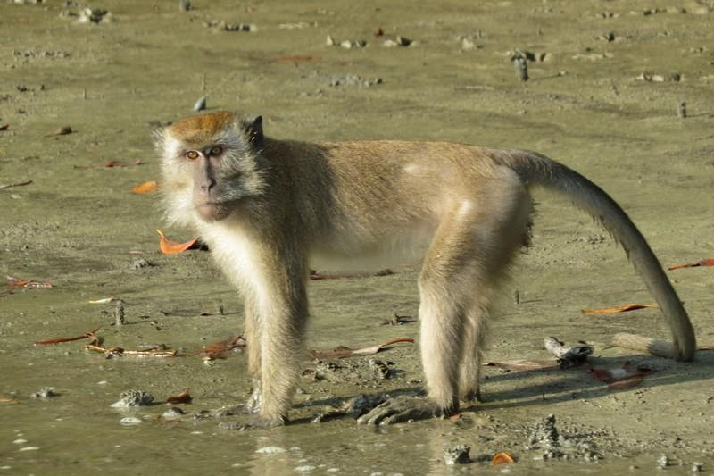 naughty Macaques