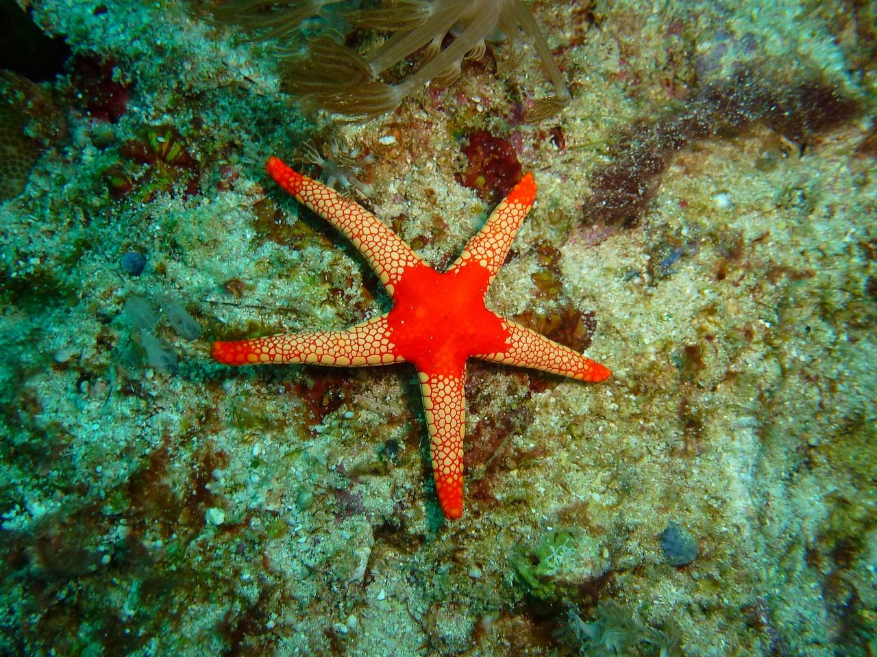 10 Most Unforgettable Diving Spots in Philippines