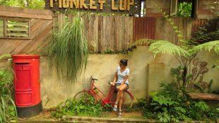 monkey cup cafe
