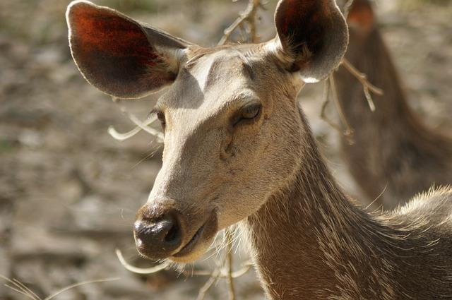 Top National Parks in India for an Offbeat Wildlife Experience
