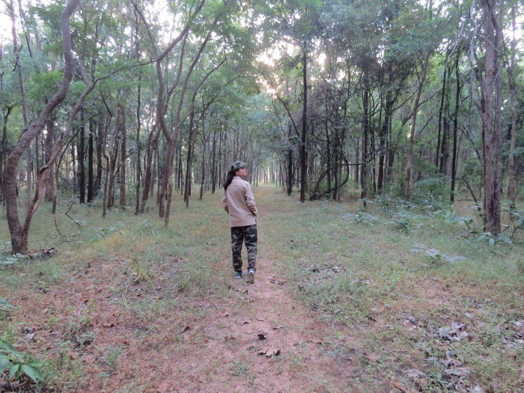 jungles of satpura