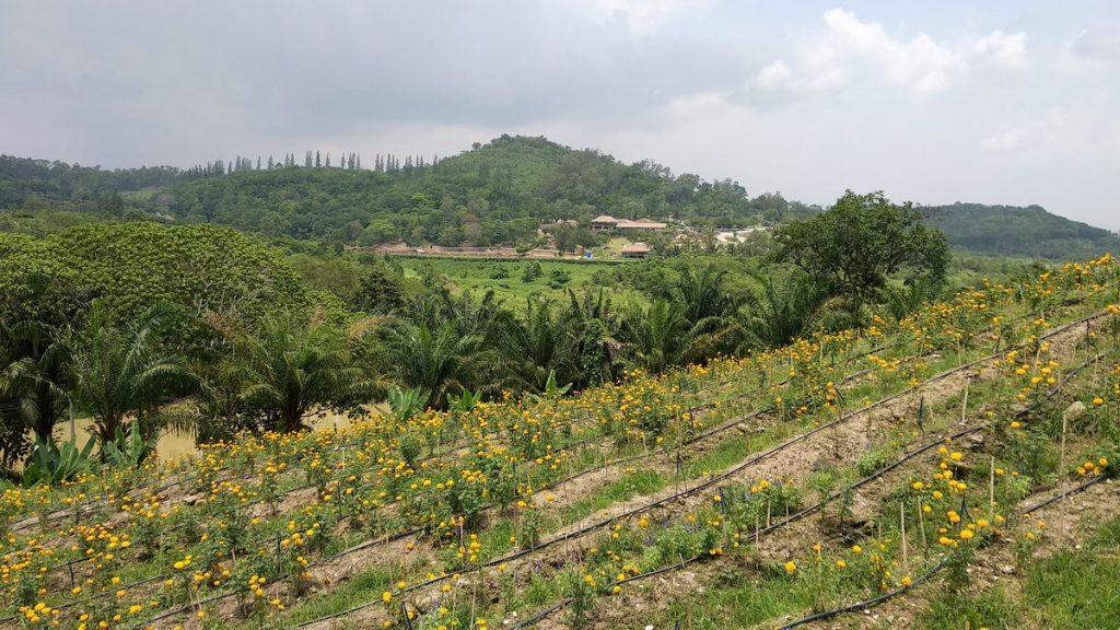 fruit farms chanthaburi
