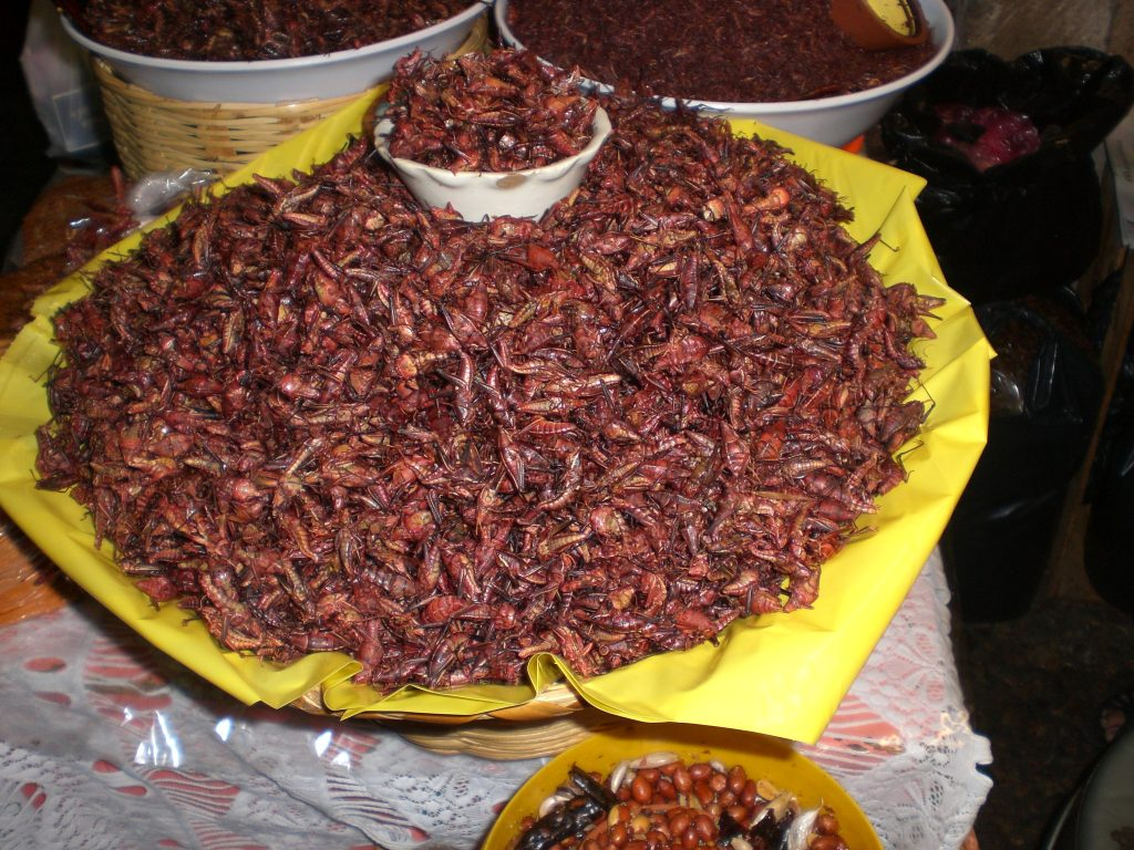 fried crickets in mexico