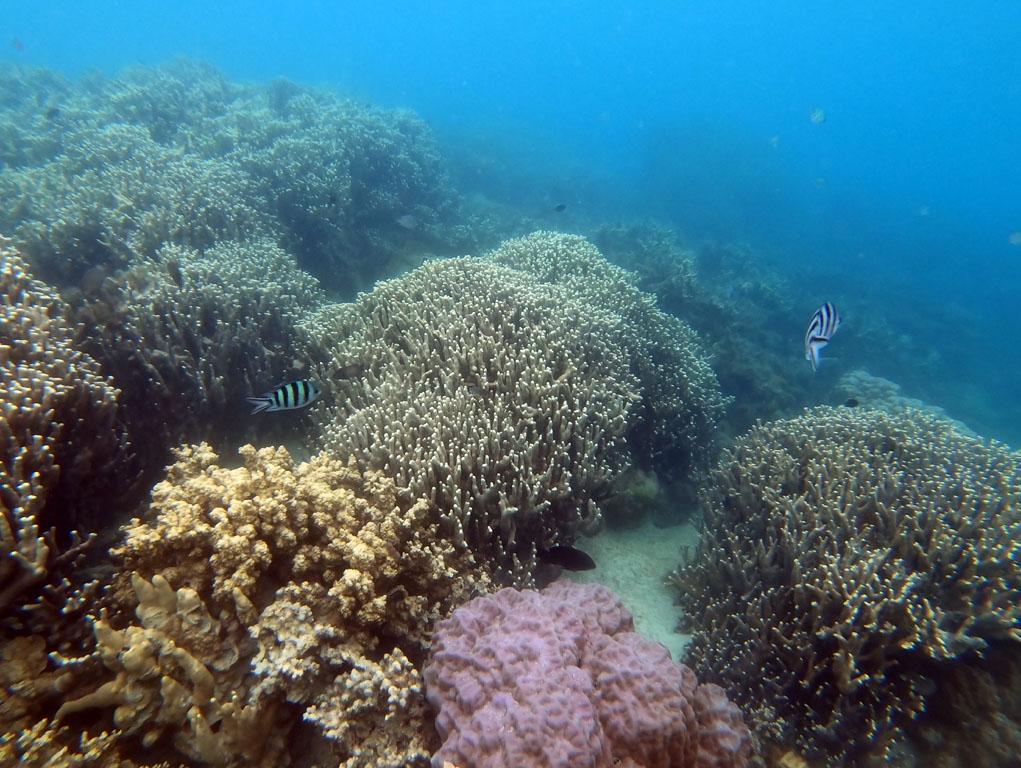 snorkeling at pulau macan