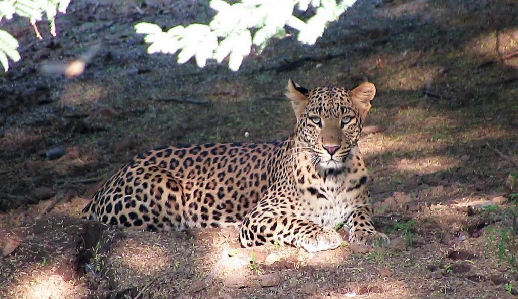 jhalana national park jaipur
