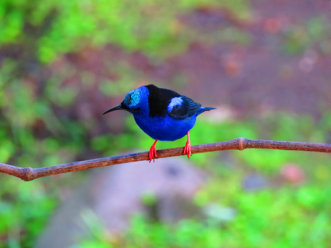 Birding in Costa Rica [Bogarin Trail - La Fortuna Field Guide]